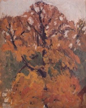Stanisław Czajkowski (1878 Warszawa - 1954 Sandomierz), Drzewo jesienią