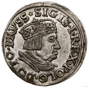 Trojak, 1536, mennica Gdańsk; popiersie króla z waską g...