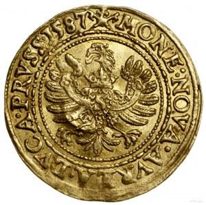 Dukat, 1587, Królewiec; Aw: Postać elektora i księcia p...