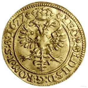 Dukat, 1677, mennica Stralsund, Aw: Herb miasta w wieńc...