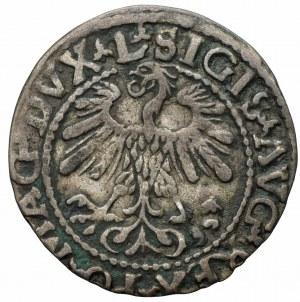 Zygmunt II August (1548-1572) - Półgrosz 1559, Wilno, L/LITVA