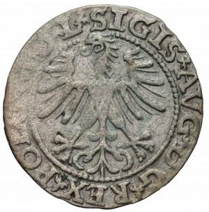 Zygmunt II August (1548-1572) - Półgrosz 1563, Wilno, L/LITVA