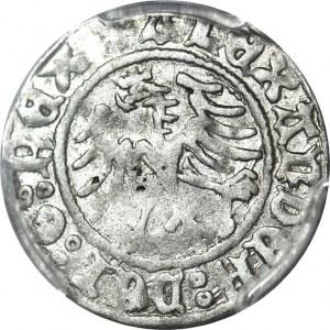 Aleksander Jagiellończyk 1501-1506, Półgrosz, Kraków, piękny