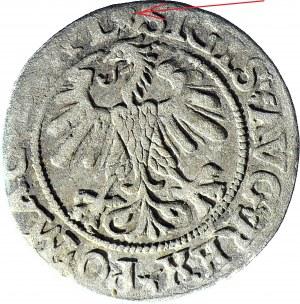 RR-, Zygmunt II August, Półgrosz 1560, Wilno, L - ROZETA, b. rzadki