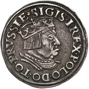 Zygmunt I Stary, Trojak Gdańsk 1536 - DANNC3K