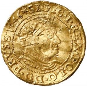 Zygmunt I Stary, Dukat Gdańsk 1546 - RZADKOŚĆ