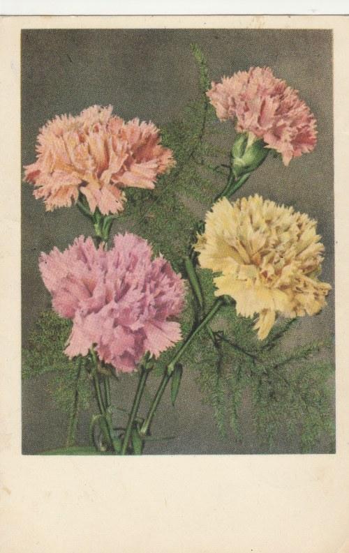 POLSKA. Kwiaty, wyd. Spółdzielnia Pracy Fotografów w Katowicach, ok. 1958