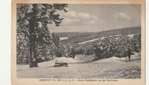 OBERHOF. OBERHOF Th., 825 m ü.d.M. Kleine Rodelbahn an der Golfwiese, wyd. A